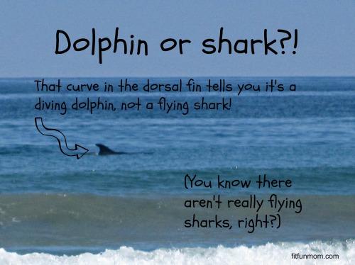 dolphin fin versus shark fin