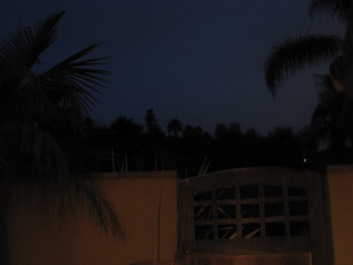 palms outlined in the dark