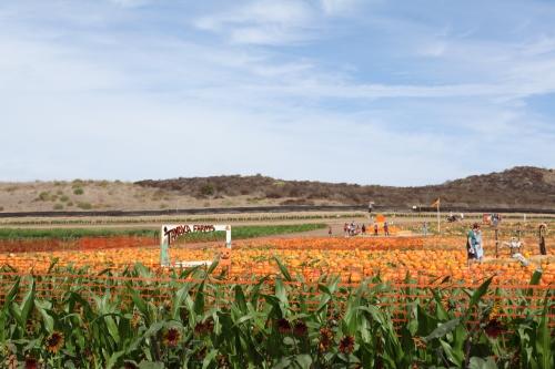 Tanaka Farms
