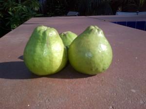 Mystery fruit #1