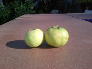 Mystery fruit #1 pic 2