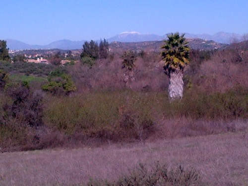 I just love the contrast of the palm tree with the view of snow on top of Mt. Baldy in the background!