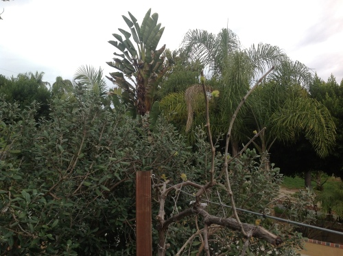 grapevines and palms
