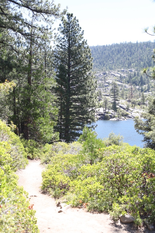 The dirt trail bordering Pinecrest Lake